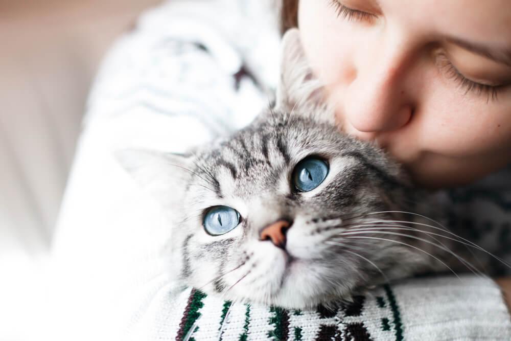ζώα κατοικίδια γάτες