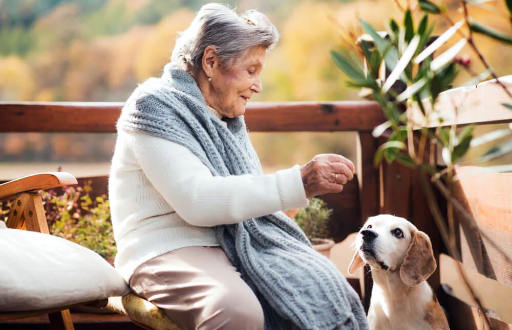 ζώα κατοικίδια ηλικιωμένοι