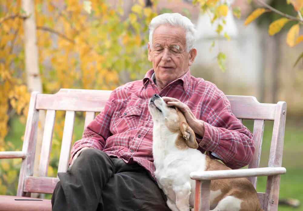 ζώα κατοικίδια ηλικιωμένος